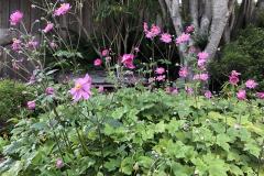 Gallery - front garden