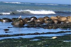 mendocino-beach